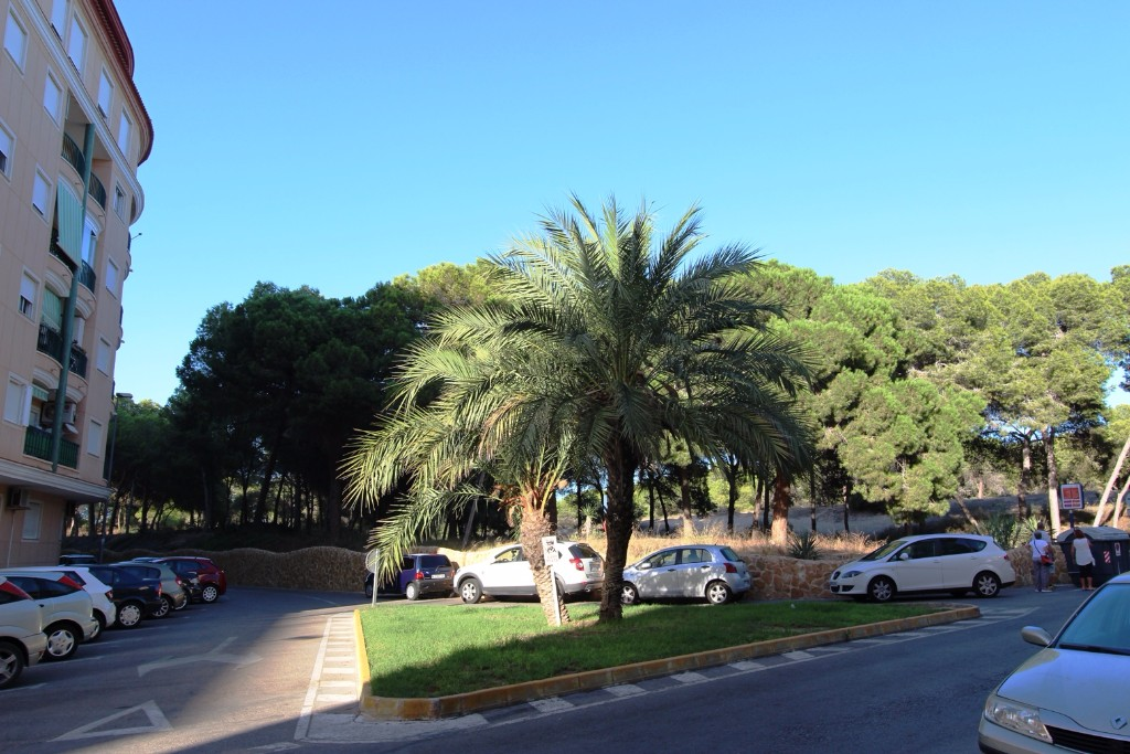 Ref:Emp 3816-XDK-57 Apartment For Sale in Guardamar del Segura